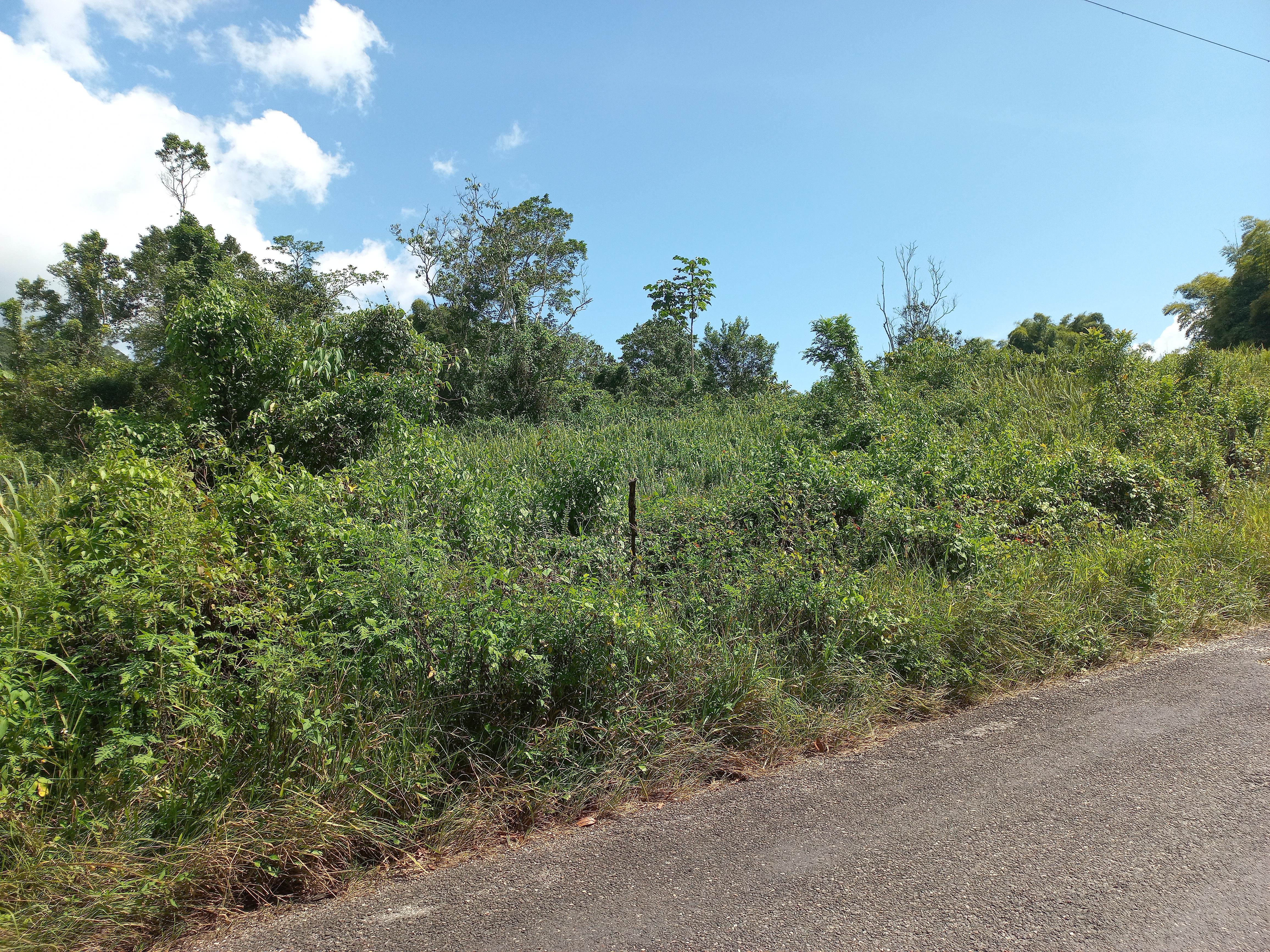 RE/MAX real estate, Jamaica, Darliston, Lot 16 Windsor Pen Westmoreland Darliston