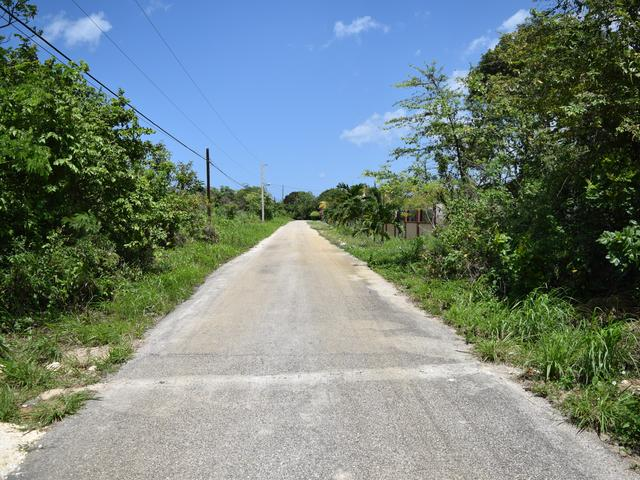 St. Ann, Discovery Bay image - 12