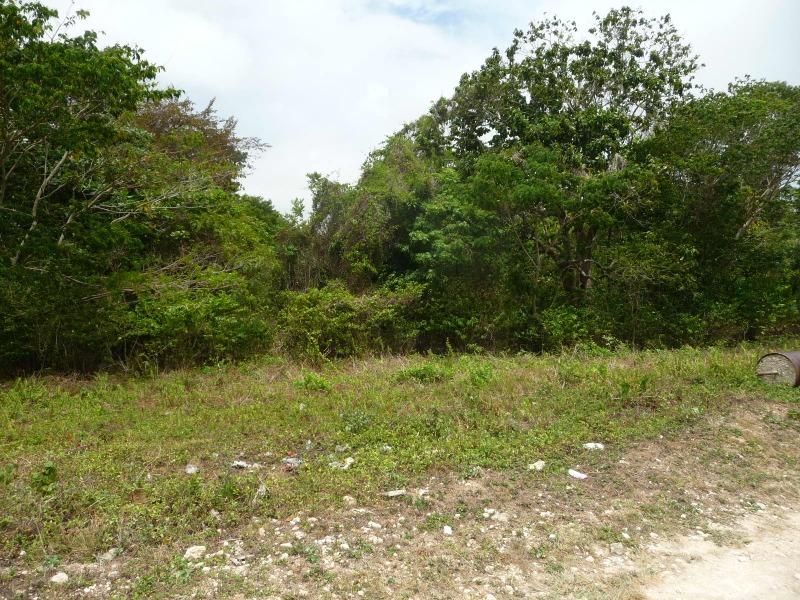 St. Ann, 9 acres, Ocho Rios image - 15