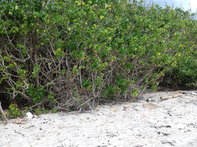 St. Thomas, Morant Bay image - 3