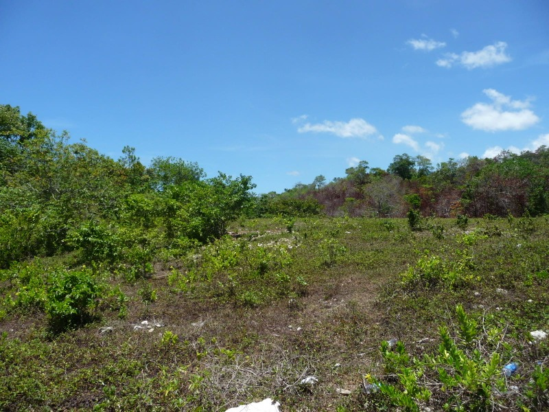 St. Ann, 9 acres, Ocho Rios image - 14