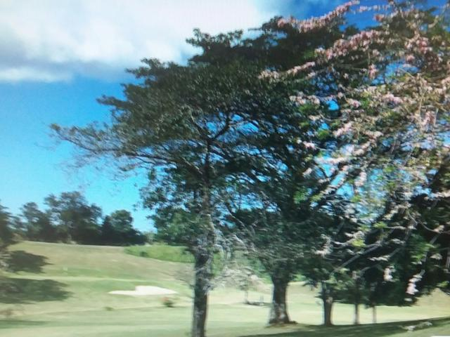 Westmoreland, Negril image - 19