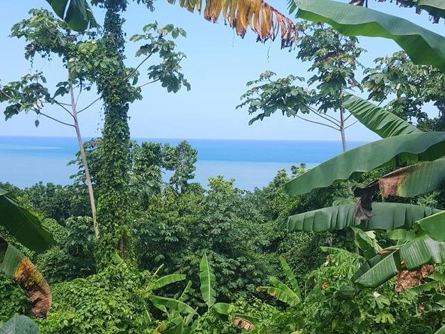 Keller williams jamaica sale jmd 5000000 buff bay in portland for Spring garden jamaican restaurant