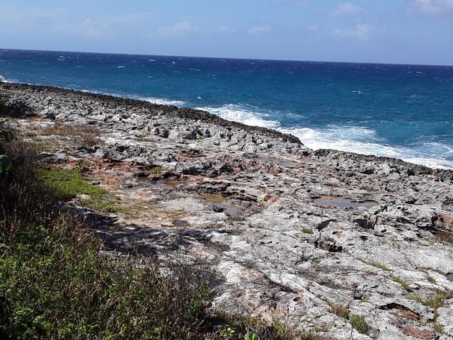 Level Land Residential Land In Lucea Jamaica 70 000 Usd