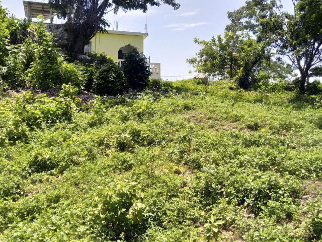Westmoreland, Negril image - 10