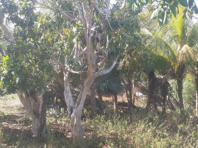 RE/MAX real estate, Jamaica, Rio Bueno, Bryan Castle Trelawny Rio Bueno
