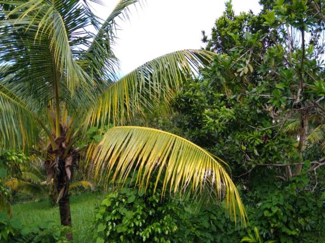 St. Ann, Ocho Rios image - 11