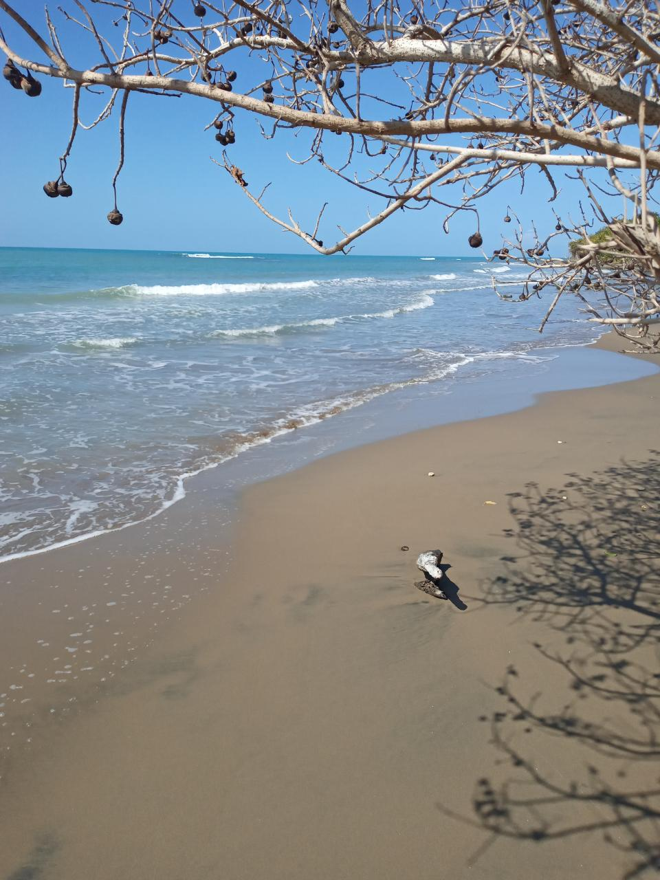 St. Elizabeth, Treasure Beach image - 4