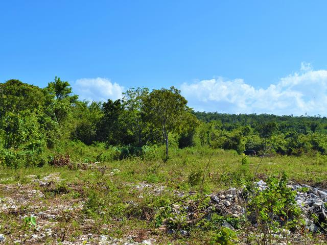 St. Ann, Discovery Bay image - 13