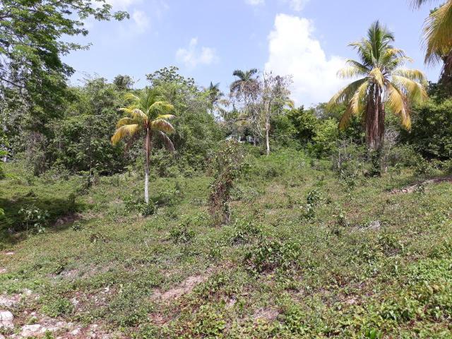 St. James, Montego Bay image - 8