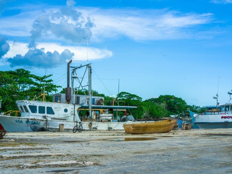 St. Elizabeth, Black River Town, Black River image - 7