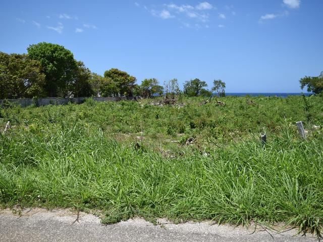 St. Ann, Discovery Bay image - 10