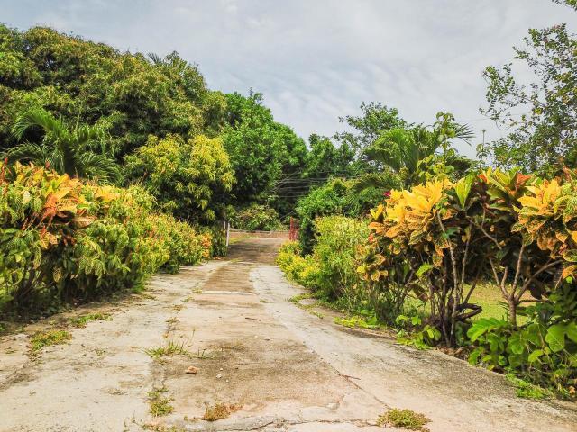 St. Ann, Runaway Bay image - 4