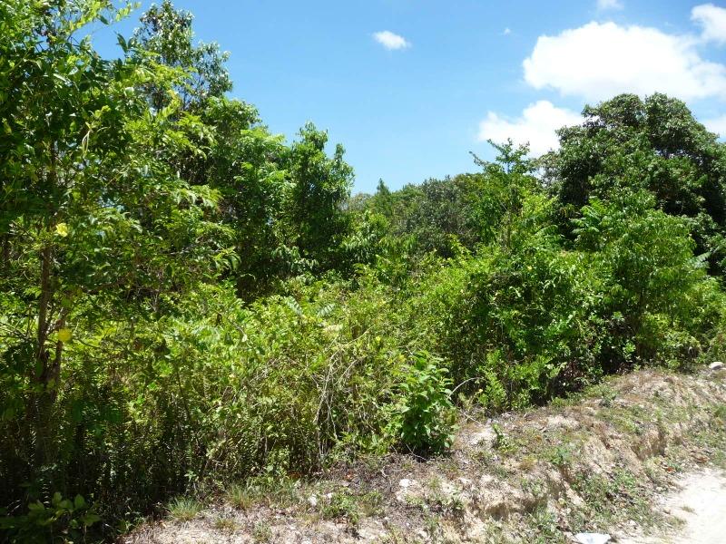 St. Ann, 9 acres, Ocho Rios image - 10